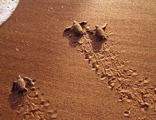Promotion to witness Borneo Wildlife & Sea Turtles!