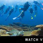 http://joannet1.sg-host.com/about-downbelow/video-collection/scuba-diving-school-trip-borneo-divedownbelow/