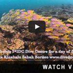 http://joannet1.sg-host.com/about-downbelow/video-collection/scuba-diving-dive-sites-tarp/